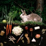 StillLife3_rabbit